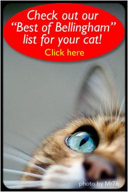 Bellingham Cat Sitters   Bellingham Cat Sitters